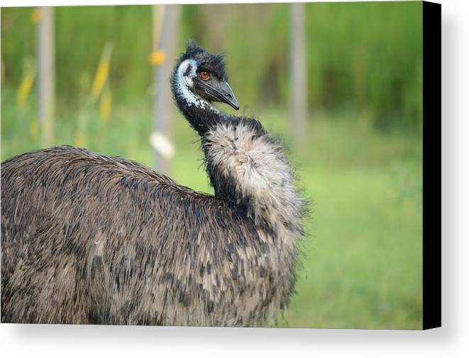 Emu Canvas Print featuring the photograph One Serious Bird by Lynda Dawson-Youngclaus