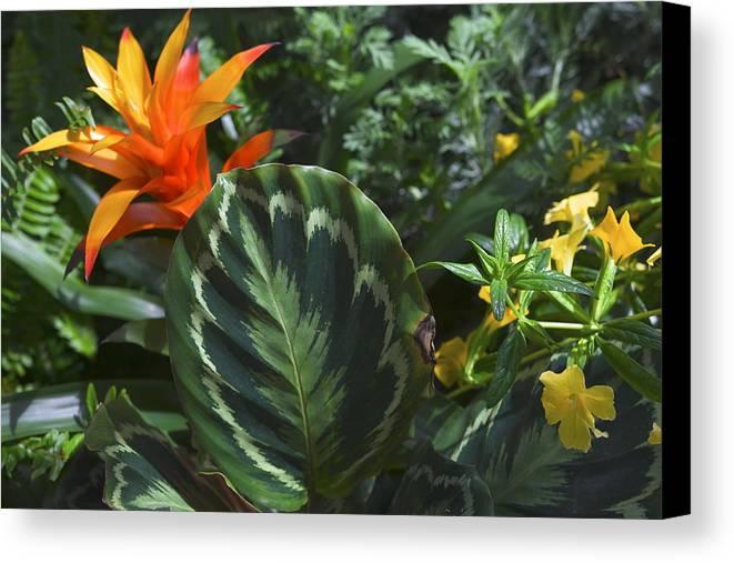 Orange Flower Canvas Print featuring the photograph Orange Flower Longwood Gardens by Mark Holden
