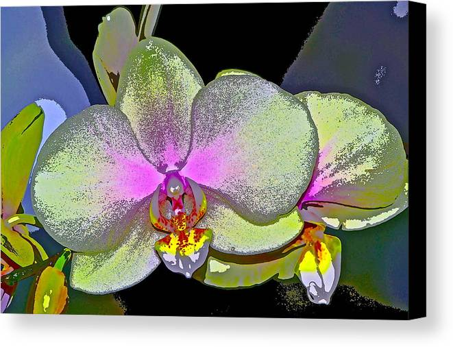 Floral Canvas Print featuring the photograph Orchid 2 by Pamela Cooper