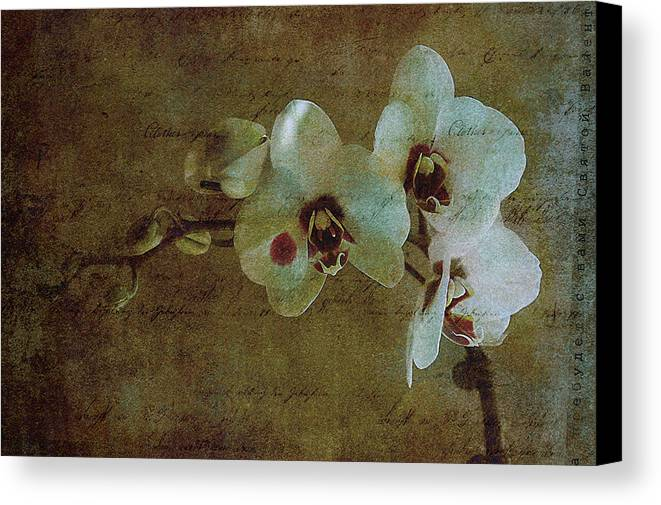 Orchid Canvas Print featuring the photograph Orchid by Inesa Kayuta