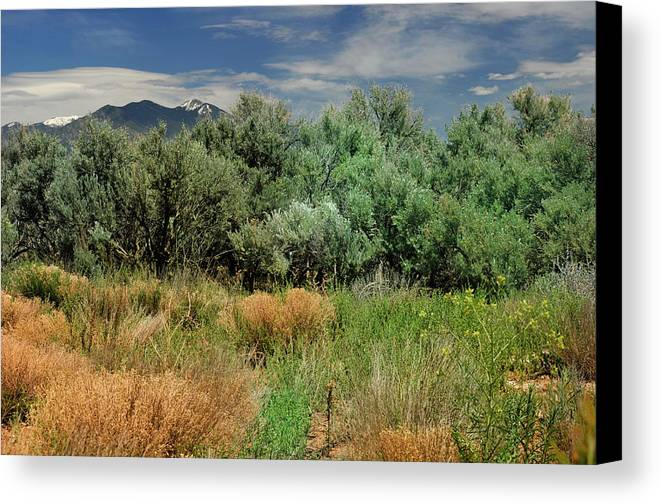 Landscape Canvas Print featuring the photograph Out On The Mesa 1 by Ron Cline