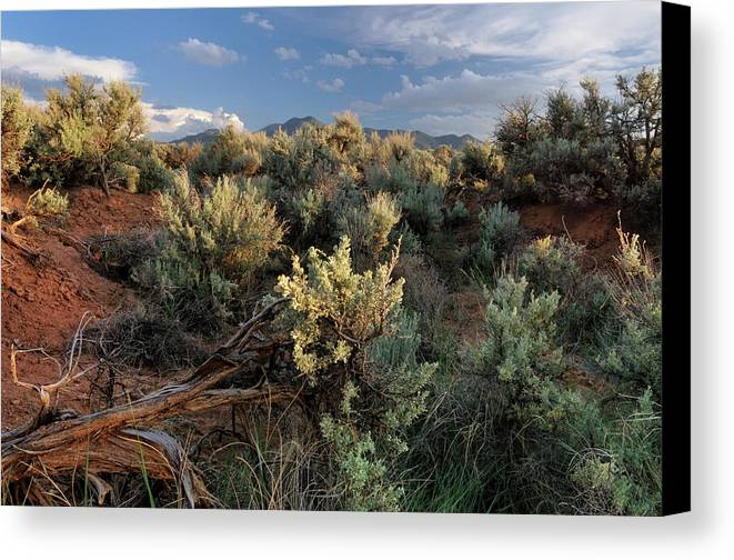 Landscape Canvas Print featuring the photograph Out On The Mesa 7 by Ron Cline