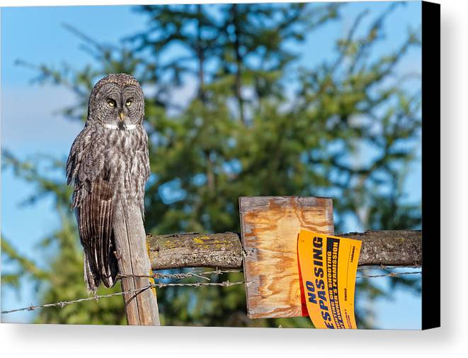 Owl Canvas Print featuring the photograph Owl 1 by Peter Olsen