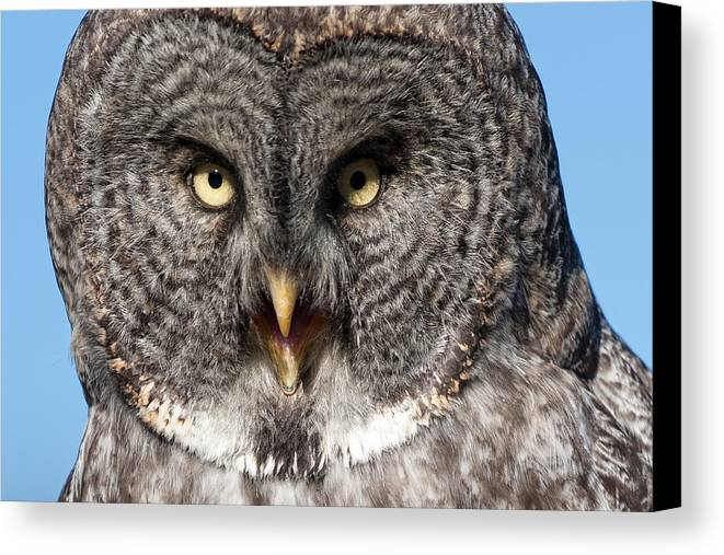 Owl Canvas Print featuring the photograph Owl 6 by Peter Olsen