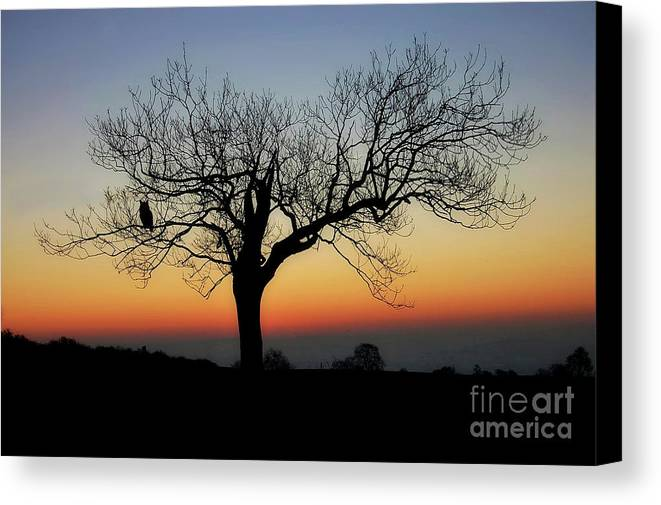 Photography Canvas Print featuring the photograph Owl Sunset by Anthony Djordjevic