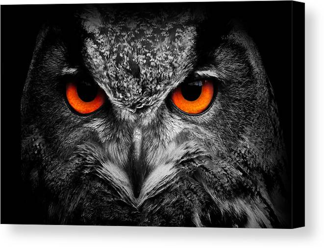 Owl Canvas Print featuring the photograph owl by Travis Simpler