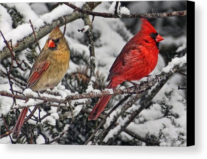 Cardinals Canvas Print featuring the photograph Pair Of Cardinals In Winter by Peg Runyan