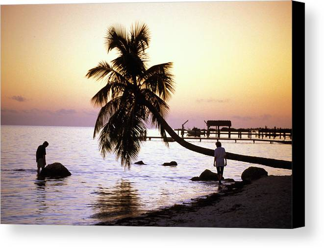 Sunset Canvas Print featuring the photograph Palm At The Moorings by Carl Purcell