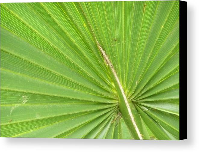 Palmetto Canvas Print featuring the photograph Palmetto II by Kathy Schumann