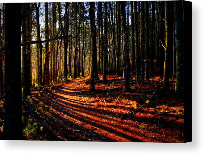 Sun Rays Canvas Print featuring the photograph Path To Serenity - Nickerson State Park by Dianne Cowen
