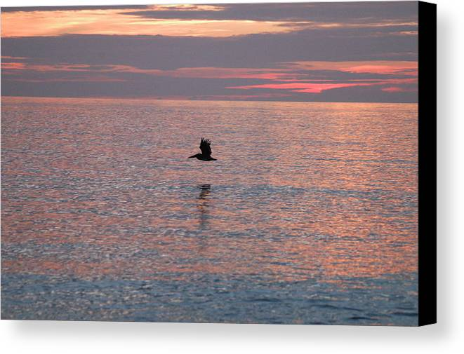 Sunrise Canvas Print featuring the photograph Pelican In Flight At Dawn by Michael Vanatta