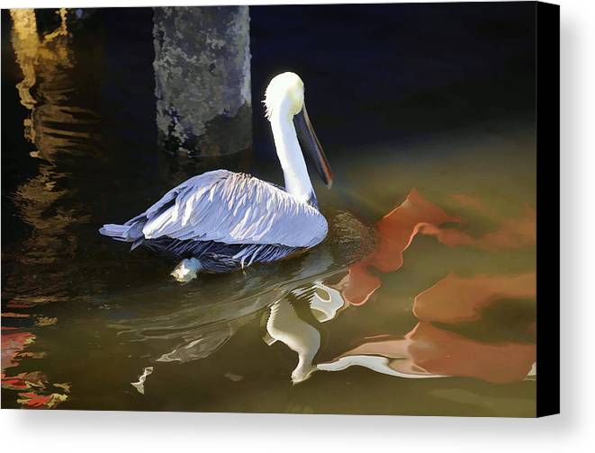 Pelican Canvas Print featuring the photograph Pelican Swim II by Jody Lovejoy