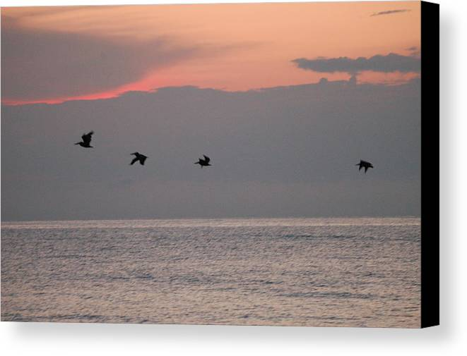 Pelicans Canvas Print featuring the photograph Pelicans In Flight by Michael Vanatta