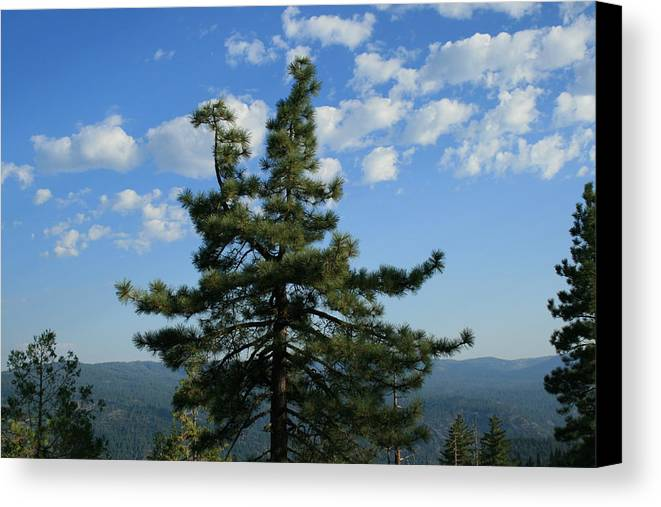 Veiw Canvas Print featuring the photograph Perfect View by Joshua Sunday