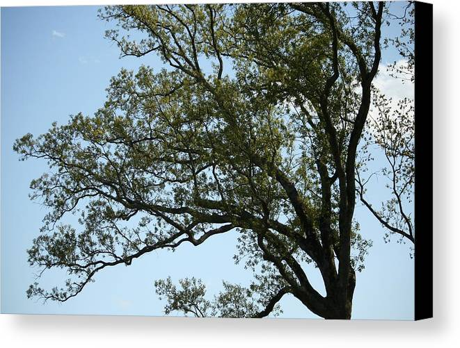 Tree Canvas Print featuring the photograph Permanent Movement by Magda Levin-Gutierrez