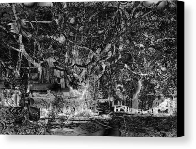 Tree Canvas Print featuring the photograph Perturbations Backyard by Johnny Aguirre