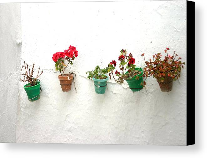 Photographer Canvas Print featuring the photograph Picena 5 by Jez C Self