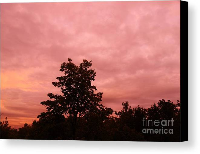 Pink Canvas Print featuring the photograph Pink Sunset by Alice Heart