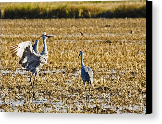 Nature Canvas Print featuring the photograph Playing Toss The Stick by Charlie Osborn