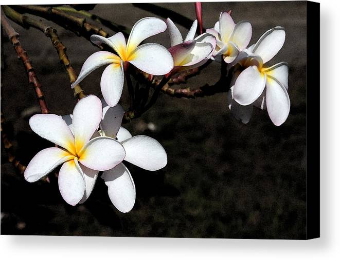 Watercolor Canvas Print featuring the photograph Plumeria 1 by Doug Johnson
