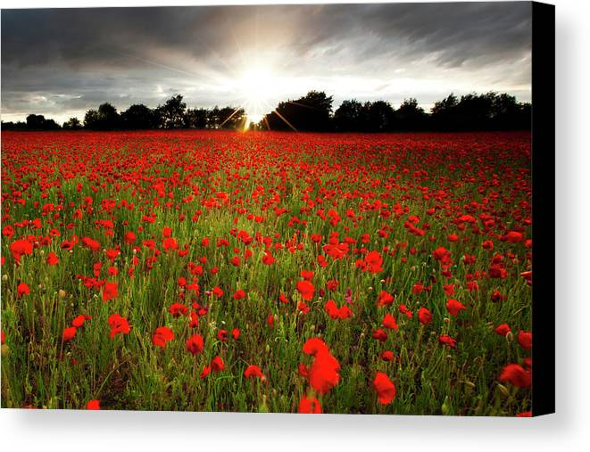 Horizontal Canvas Print featuring the photograph Poppy Field At Sunset by Doug Chinnery