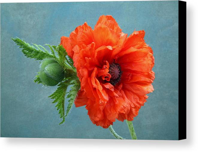 Poppy Canvas Print featuring the photograph Poppy Flower by Manfred Lutzius