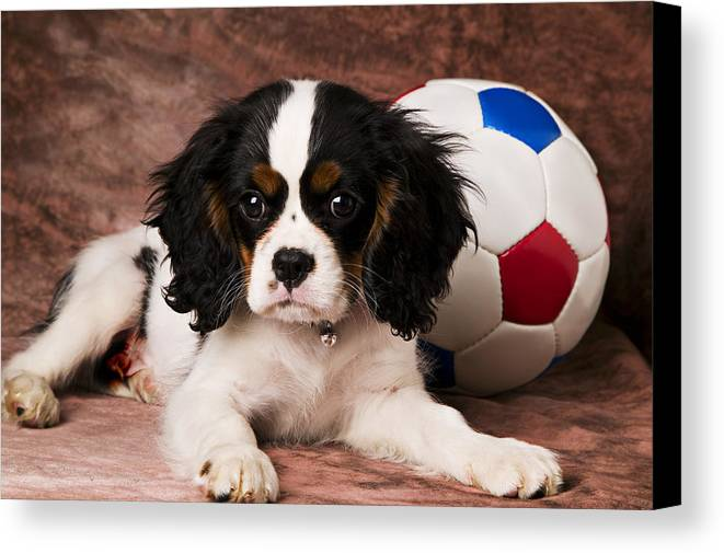 Puppy Dog Cute Doggy Domestic Pup Pet Pedigree Canine Creature Soccer Ball Canvas Print featuring the photograph Puppy With Ball by Garry Gay