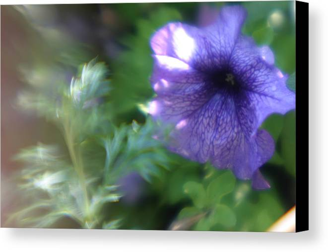 Purple Flower Canvas Print featuring the photograph Purple In Monets Garden by Jennifer McDuffie
