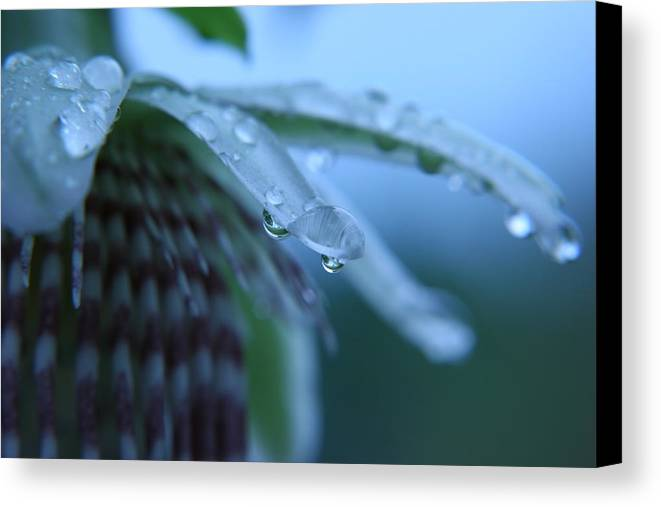 Rain Canvas Print featuring the photograph Rainflower by Linda Russell