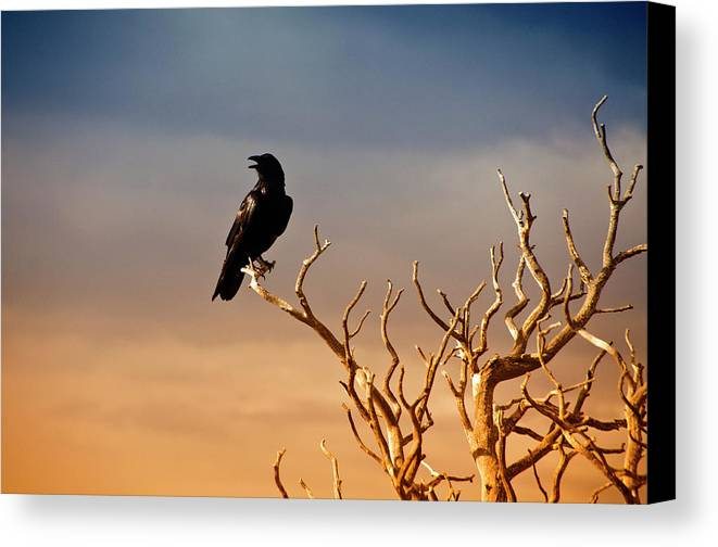 Horizontal Canvas Print featuring the photograph Raven On Sunlit Tree Branches, Grand Canyon by Trina Dopp Photography