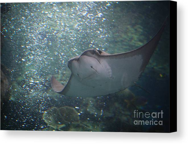 Ray Canvas Print featuring the photograph Ray by Brenton Woodruff