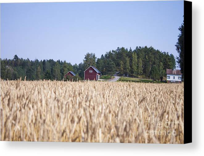 Field Canvas Print featuring the photograph Red House Wheat Field by D R