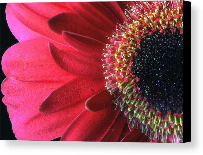 Red Canvas Print featuring the photograph Red Sun by Gina Cormier