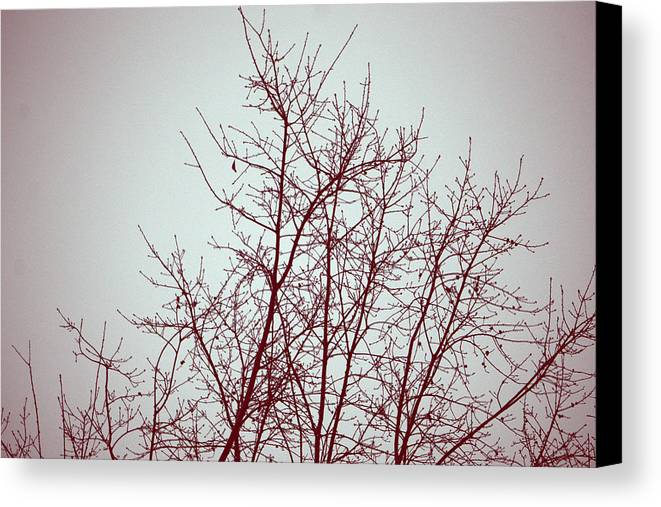 Fog Canvas Print featuring the photograph Red Tree by Kathy Barney