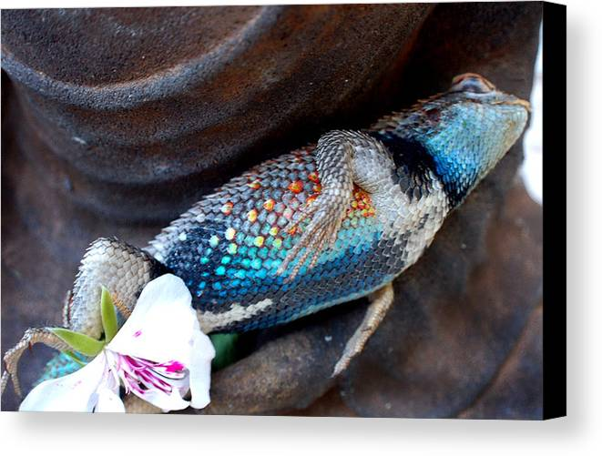Stil Life Canvas Print featuring the photograph Requiem For A Rainbow Lizard by Heather S Huston
