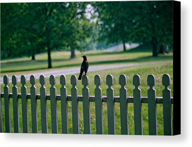 Bird Canvas Print featuring the photograph Robin On A Fence by Lone Dakota Photography