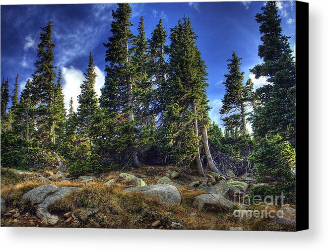 Nature Canvas Print featuring the photograph Rock Garden by Pete Hellmann