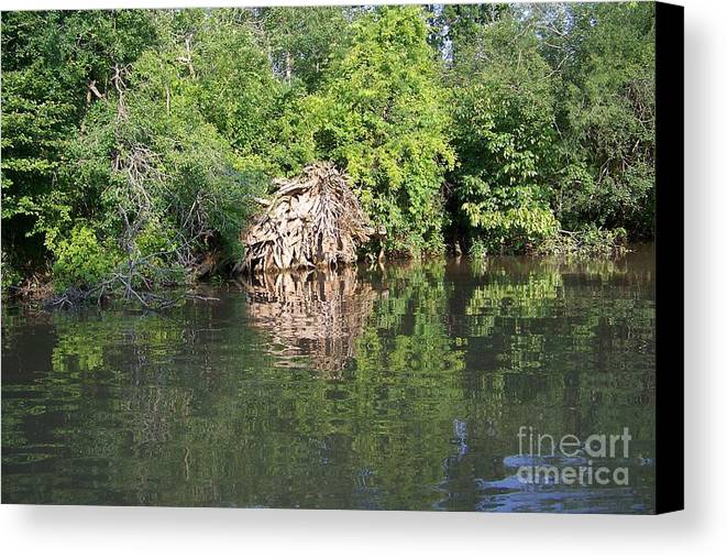 Tree Roots Canvas Print featuring the photograph Roots In The Stream by Deborah MacQuarrie-Selib