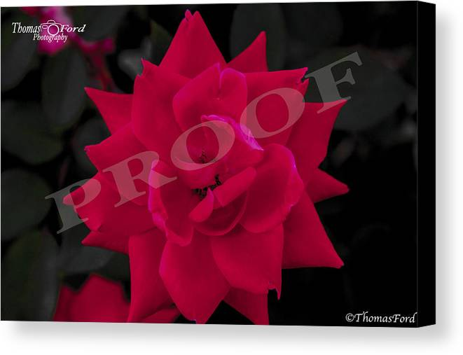 Canvas Print featuring the photograph Rose Flower by Thomas Ford