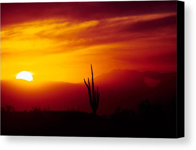 Arizona Canvas Print featuring the photograph Saguaro Sunset by Randy Oberg
