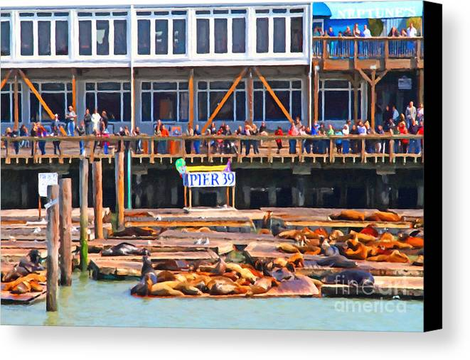 San Francisco Canvas Print featuring the photograph San Francisco Pier 39 Sea Lions . 7d14272 by Wingsdomain Art and Photography