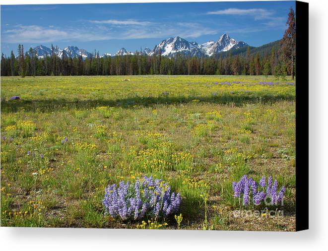 Wildflowers Canvas Print featuring the photograph Sawtooths And Wildflowers by Idaho Scenic Images Linda Lantzy