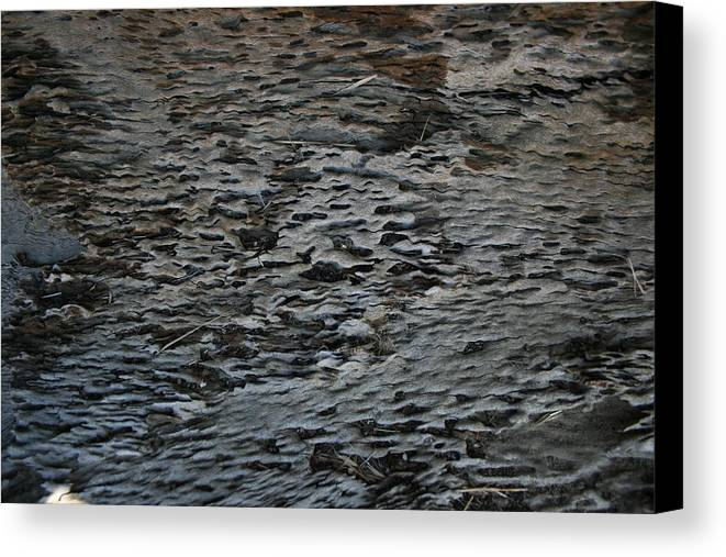 Scales Canvas Print featuring the photograph Scaley Log by Joshua Sunday