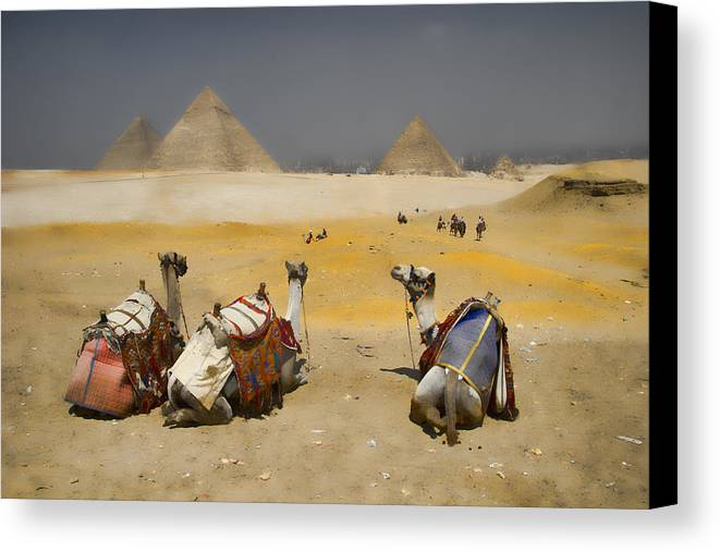 Egypt Canvas Print featuring the photograph Scenic View Of The Giza Pyramids With Sitting Camels by David Smith