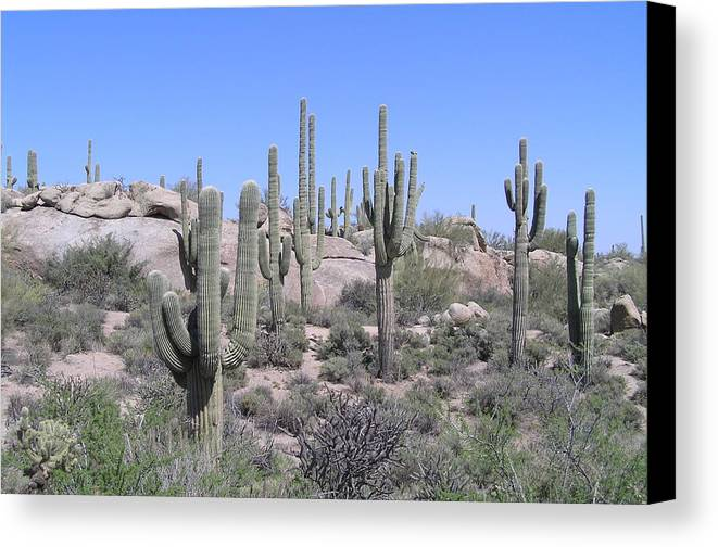 Desert Canvas Print featuring the photograph Sentinels by Sandra Bourret