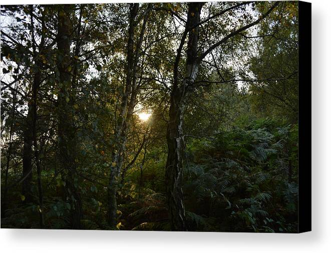 Setting Canvas Print featuring the photograph Setting Sun Through Trees by Adrian Wale