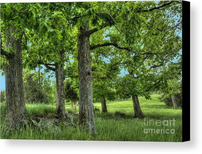 Peace Project Canvas Print featuring the photograph Shade Trees by Pete Hellmann