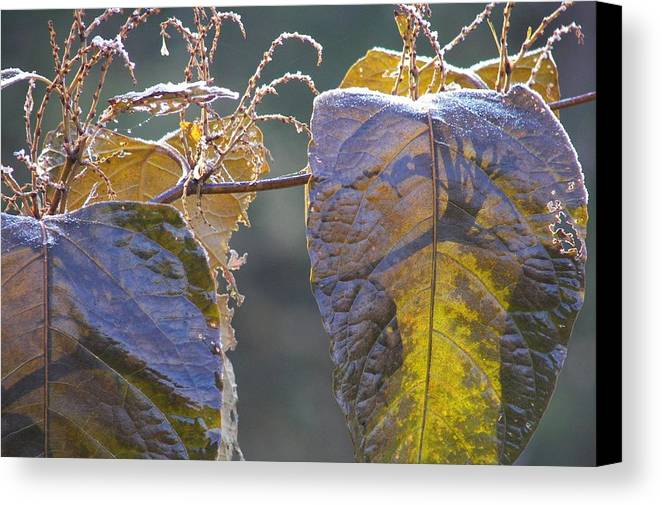 Winter Canvas Print featuring the photograph Shadows by JAMART Photography