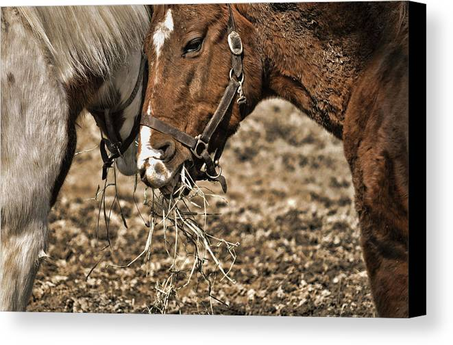 Horse Canvas Print featuring the photograph Sharing The Hay by JAMART Photography