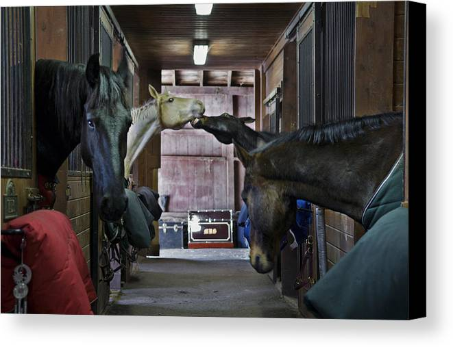 Horse Canvas Print featuring the photograph Shenanigans by Jack Goldberg